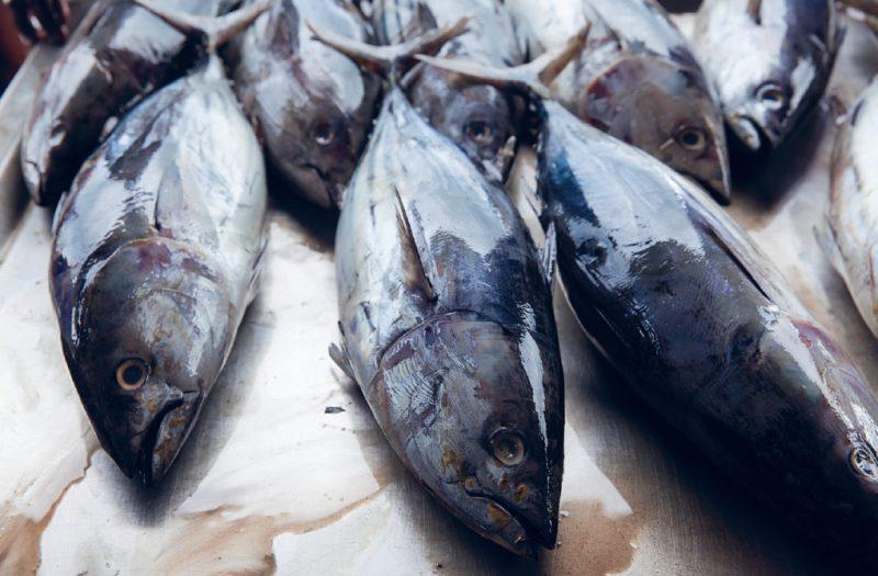 Il tonno: le specie presenti nel Mediterraneo