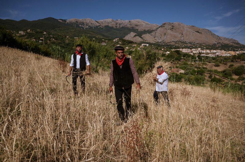 Festa del Grano di Castelbuono: alla riscoperta dei grani autoctoni siciliani