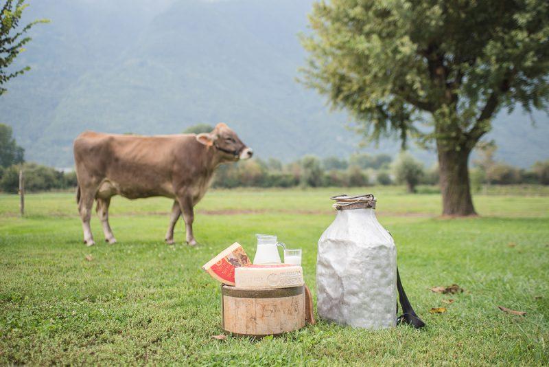 Dal Bitto al Monte Veronese, 5 formaggi di montagna da scoprire nell'estate 2021
