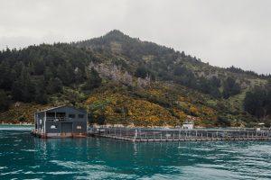 Ora King Salmone Nuova Zelanda